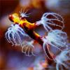 Diving Irian Jaya