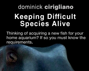 Keeping Difficult Species Alive