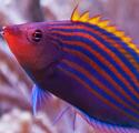 Pest-Free Reefkeeping III