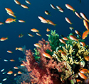 Reef Zones of the Indo-Pacific
