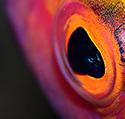 Marine Life in Macro
