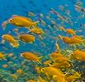 Skeptical Reefkeeping XI