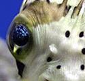 Skeptical Reefkeeping XIII