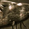 Fish Tales: Dark Waters