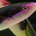 Game-Changing Aquarium Data