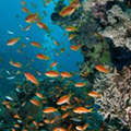 The Southern Red Sea