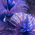 Fish Tales: Reefing in Australia
