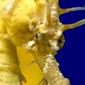 A Look into Seahorses