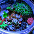 Fish Tales: A Different Way to Reef