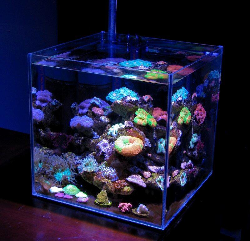 Feature Aquarium Ecoreef One A New Kind Of Nano Reef Reefs Com