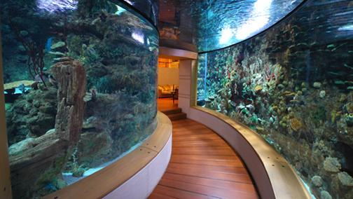 A 150,000 gallon home aquarium. http://isshamaqua.com/projects.html