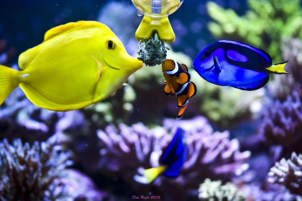 fish_brocolli