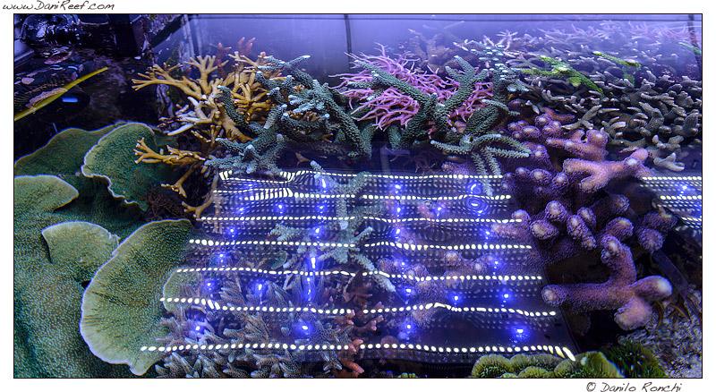 DaniReef Marine Aquarium with Sicce GNC AM 466
