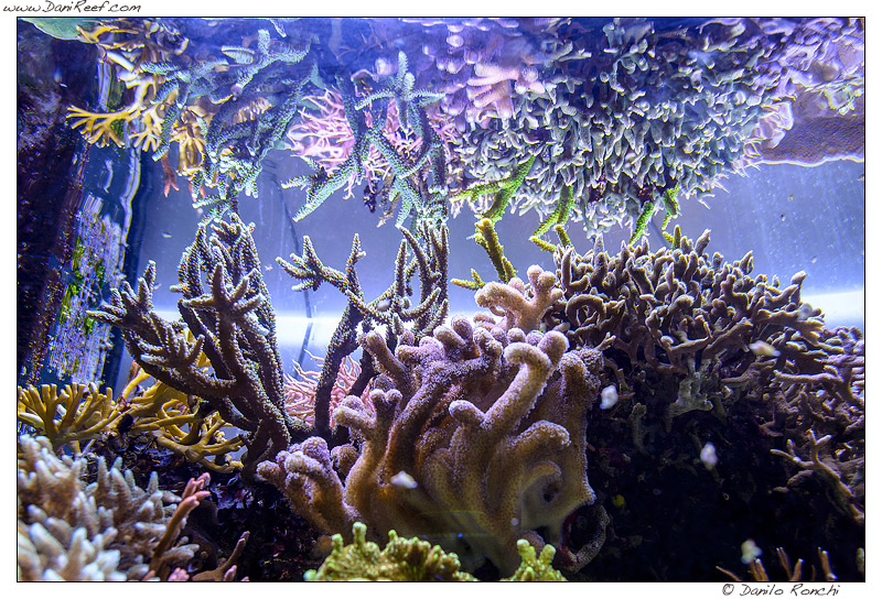DaniReef Marine Aquarium