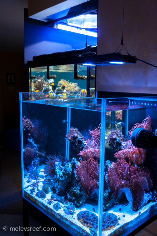 Led Lights That Make Cs Pop With Color Reefs