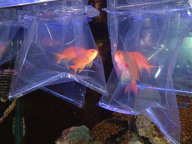 Fish Acclimation