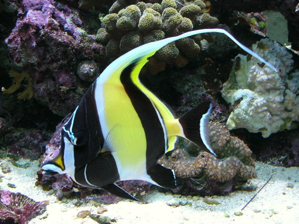 Even Now Do Moorish Idols Remain Impossible To Keep