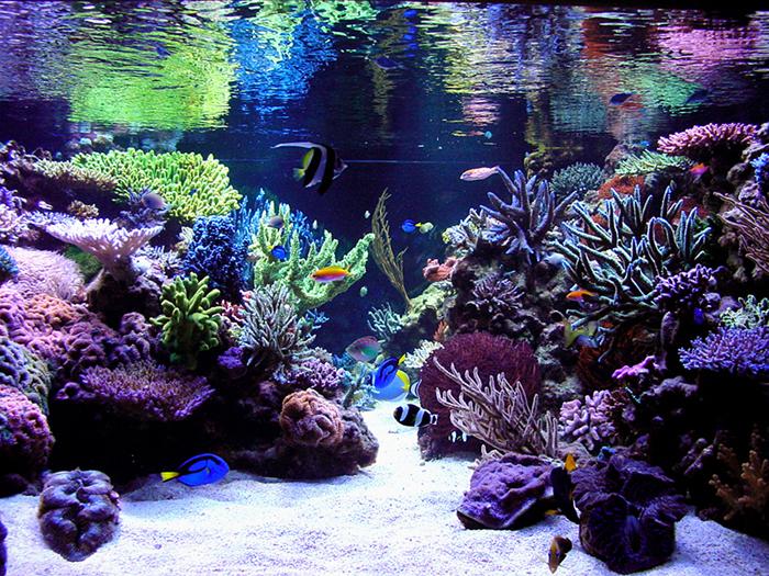 Aesthetics Of Aquascaping Part Ii Reefs Com