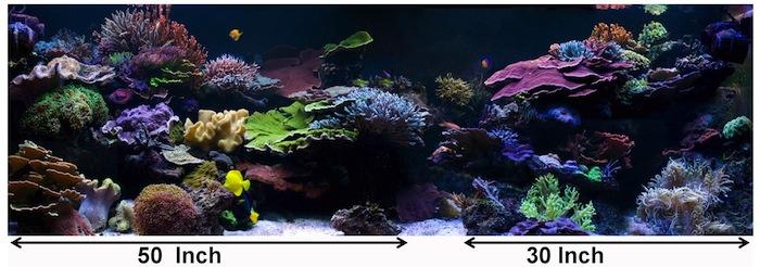 Aesthetics Of Aquascaping Part I Reefs Com