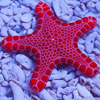 credit: Unique Corals