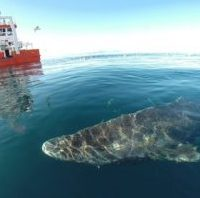 greenland shark - reefs