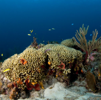 st martin coral 2 - reefs
