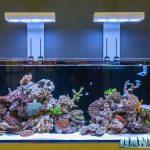 How to Reduce Aquarium Power Consumption