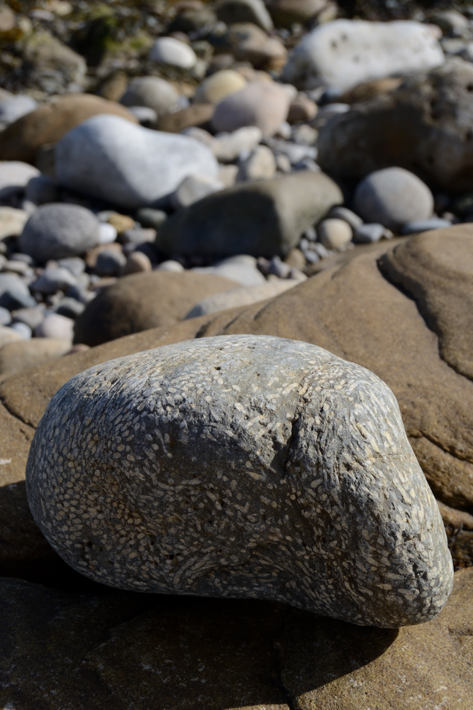 What Does a Fossilized Reef Look Like? - Reefs com