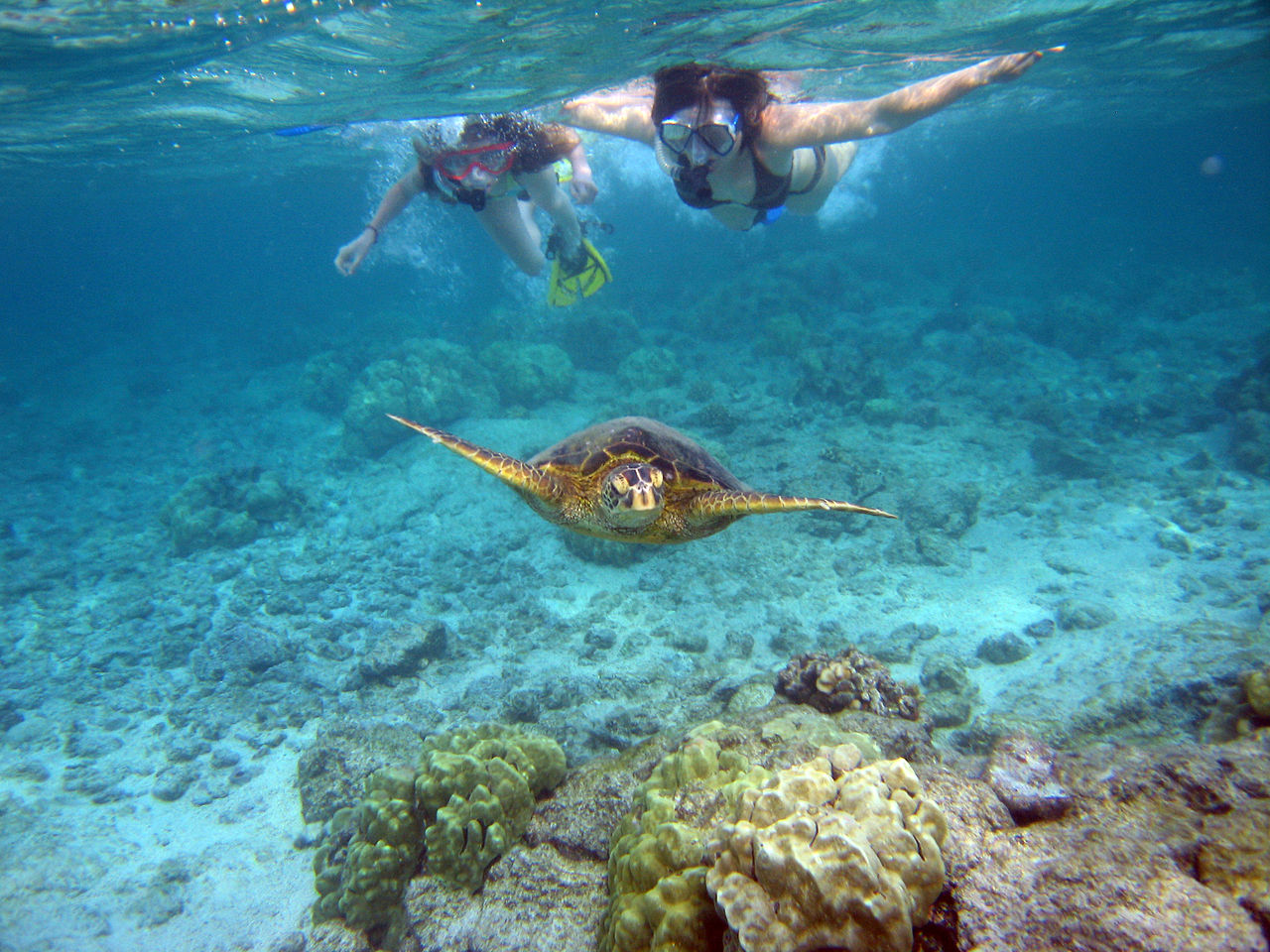 the ultimate guide to snorkeling reefs com