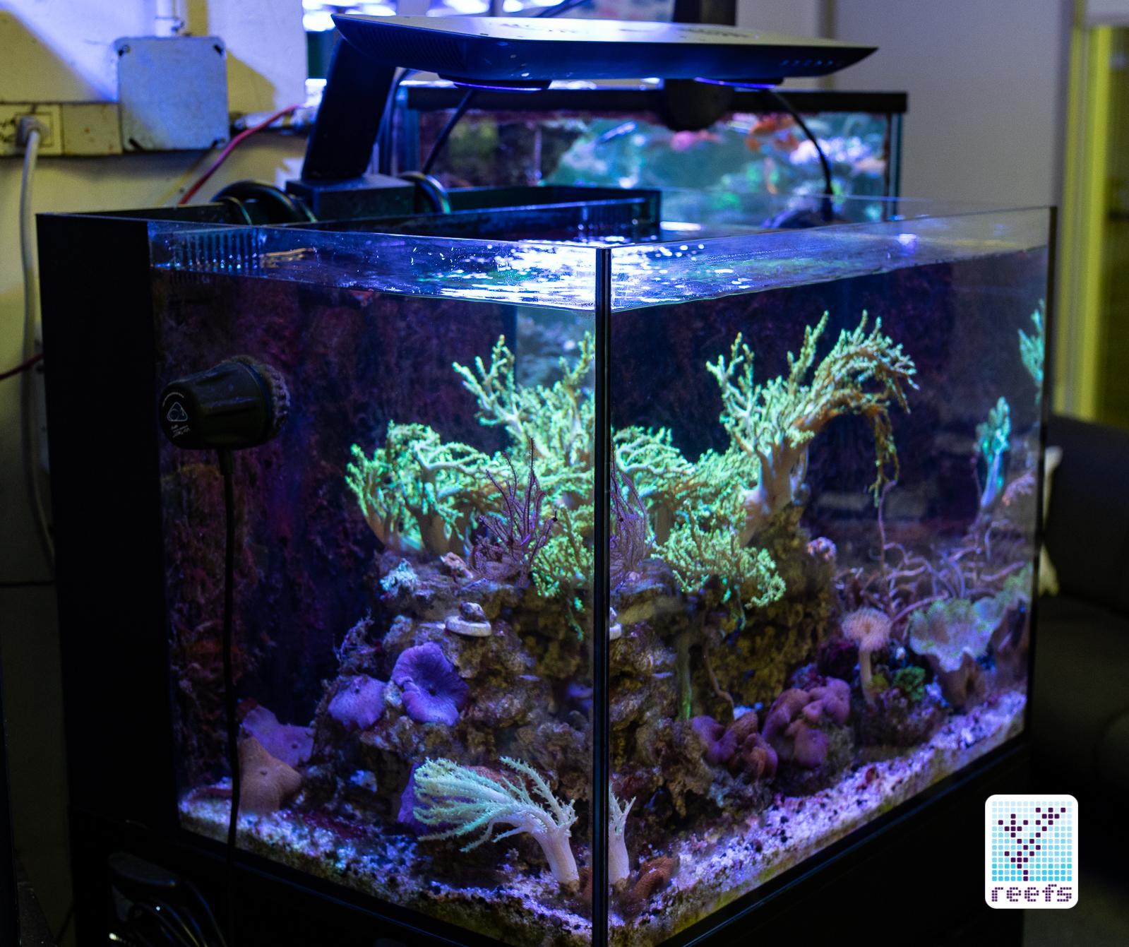 Cobalt Aquatics C-Vue Aquarium Kit: The Definitive Review