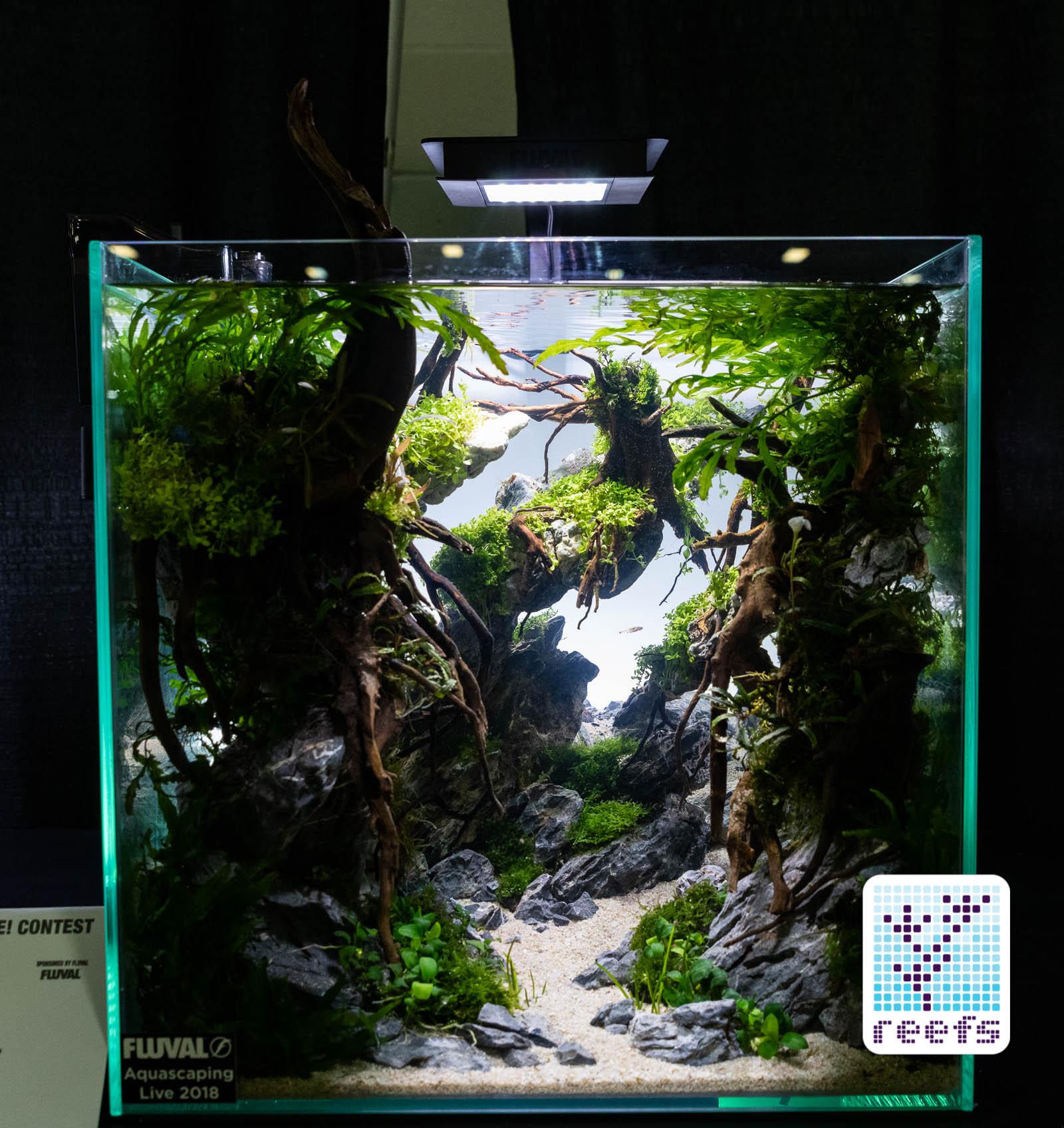 Aquascape Ideas Aquascaping Competition