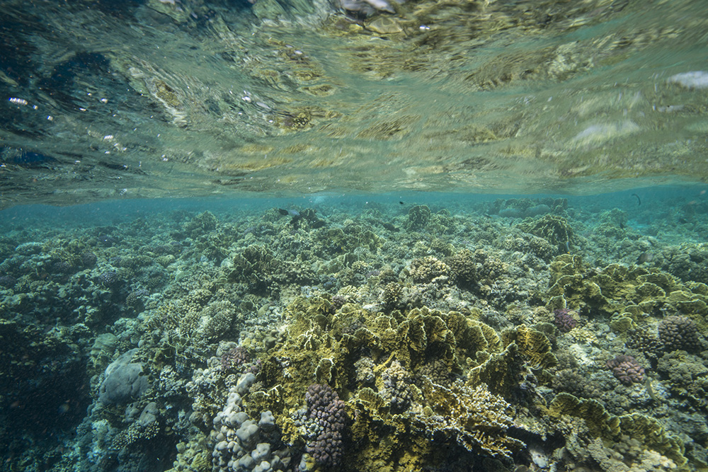 More Evidence Chemicals Linked To >> More Evidence Of Sunscreen Damaging Corals Reefs Com
