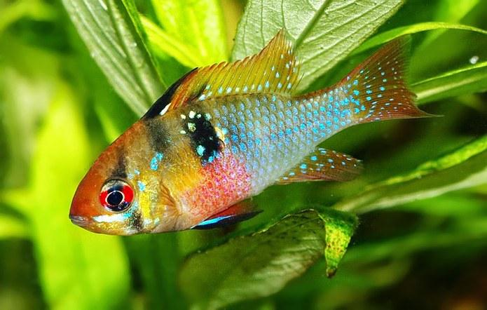 Can you get fish high on marijuana ?