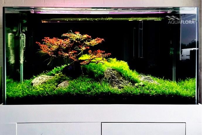 Filipe Oliveira S Bonsai Inspired Aquascapes