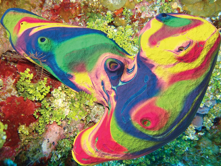 First Psychedelic Drug Isolated From A Marine Organism