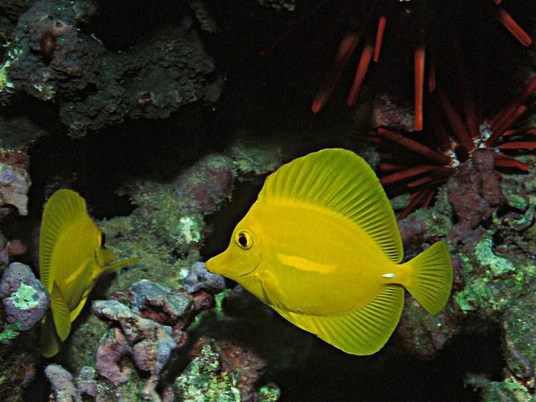 Fish Poop Is Balanced Coral Food