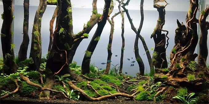 Lovely Forest Aquascape