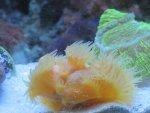 coral pic 2 007.jpg